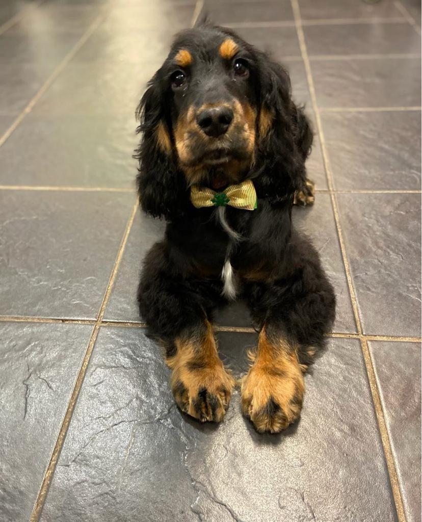 dog grooming 19