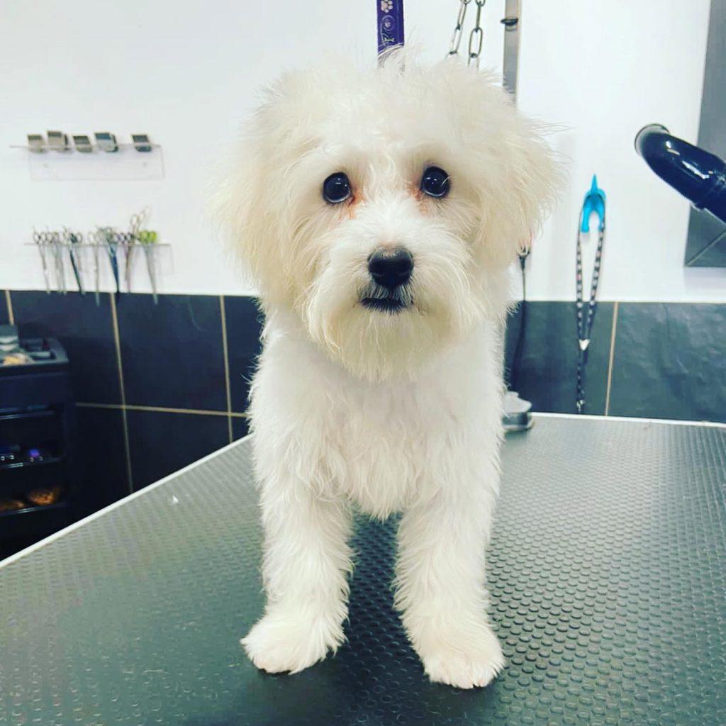 dog grooming 22