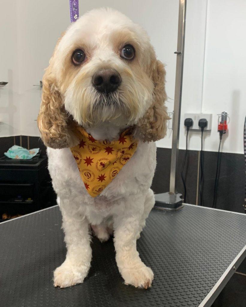 dog grooming 26