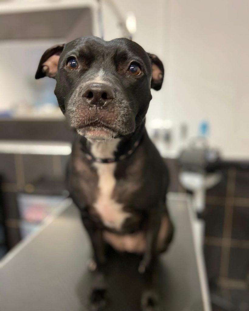 dog grooming 27