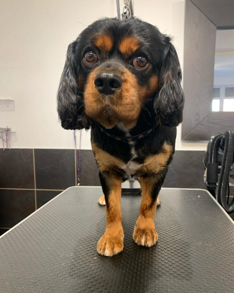 dog grooming 29