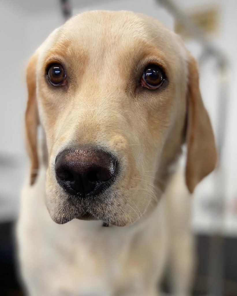 dog grooming 30