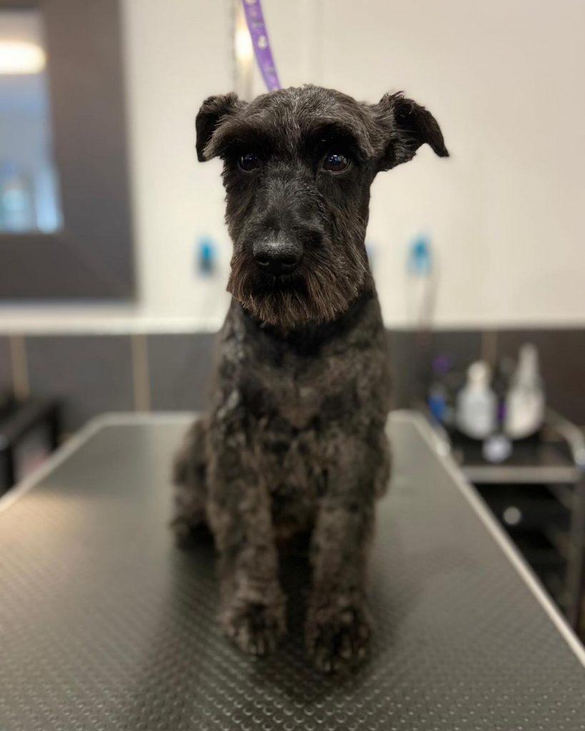 dog grooming 32