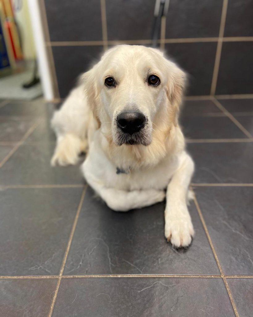 dog grooming 33