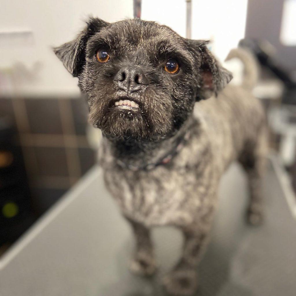 dog grooming 37