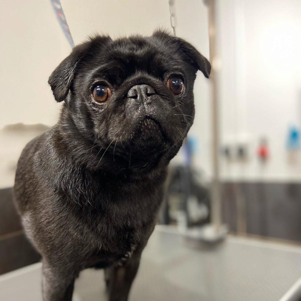 dog grooming 4
