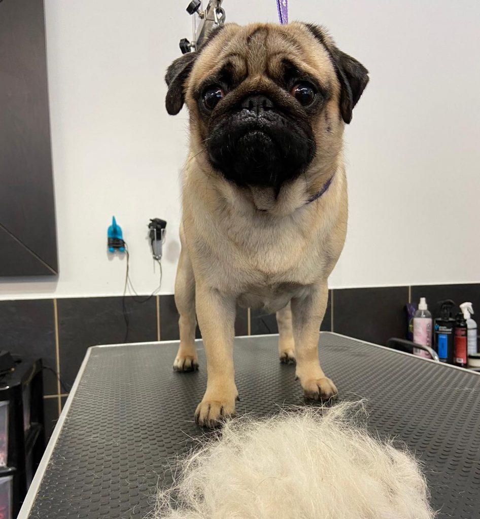 dog grooming 40