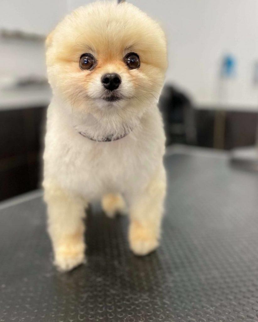 dog grooming 45