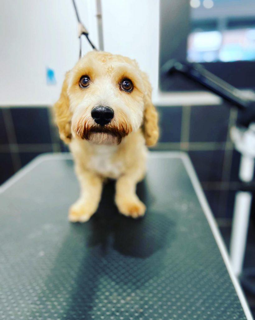 dog grooming 5