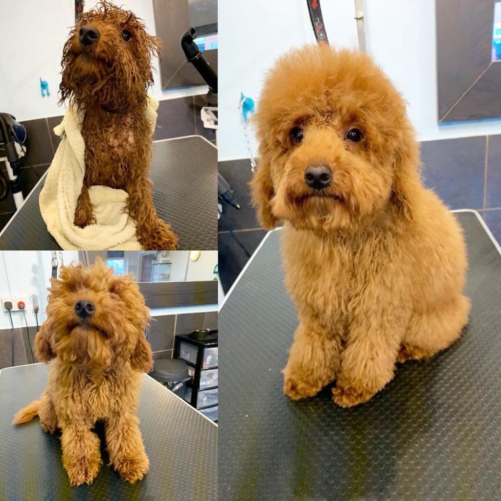 dog grooming 52