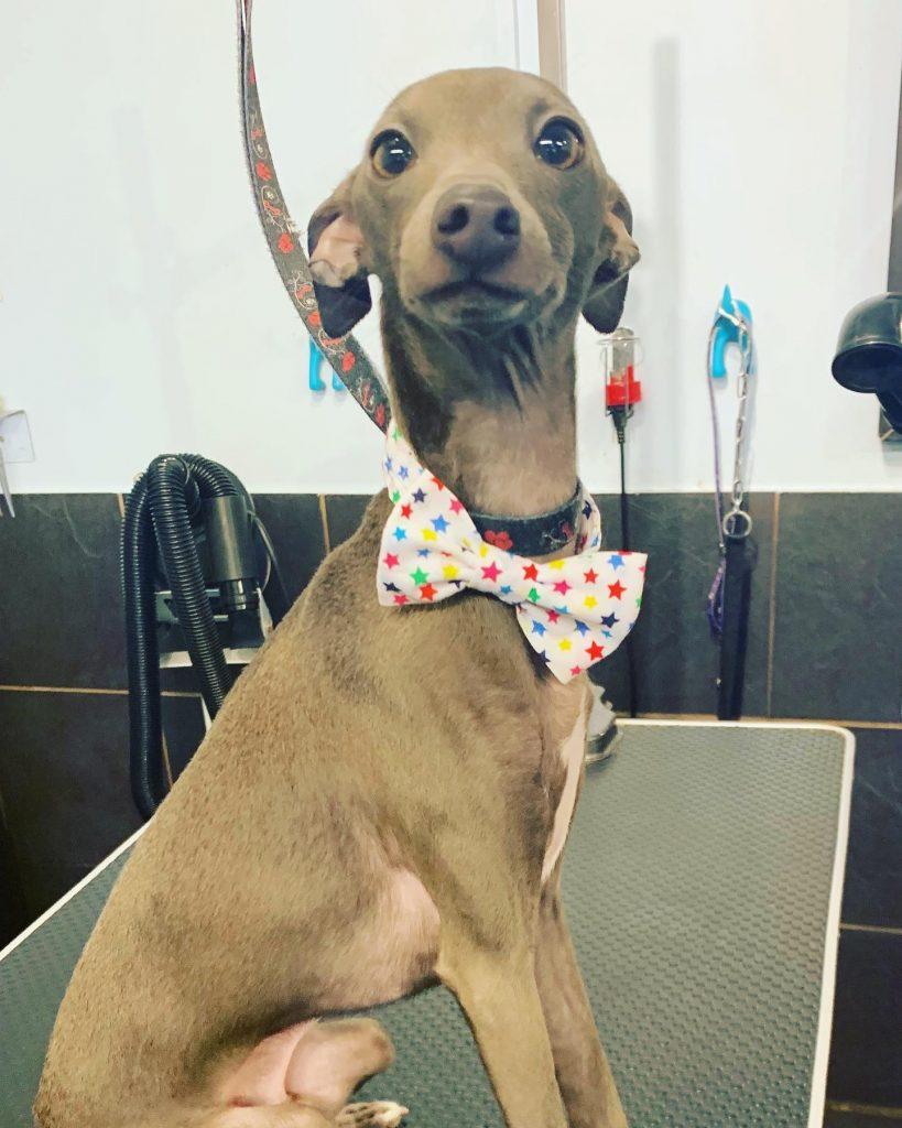 dog grooming 53
