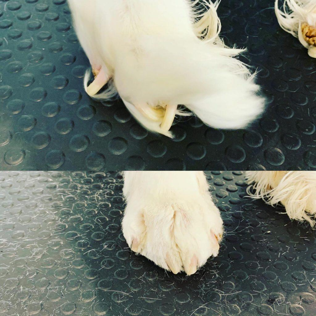 nail clip 1